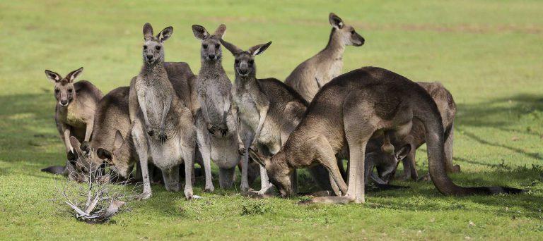 Australie – Yeppoon et le Cooberrie Park Wildlife Sanctuary