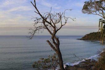 Australie – À la découverte du parc national de Noosa