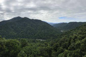 Australie – Mossman Gorge et Daintree: au cœur de la forêt tropicale australienne